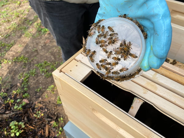 Bienen auf der Hand des Imkers