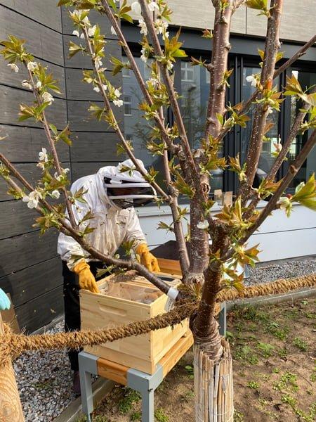Bienenvolk im Bienenkasten