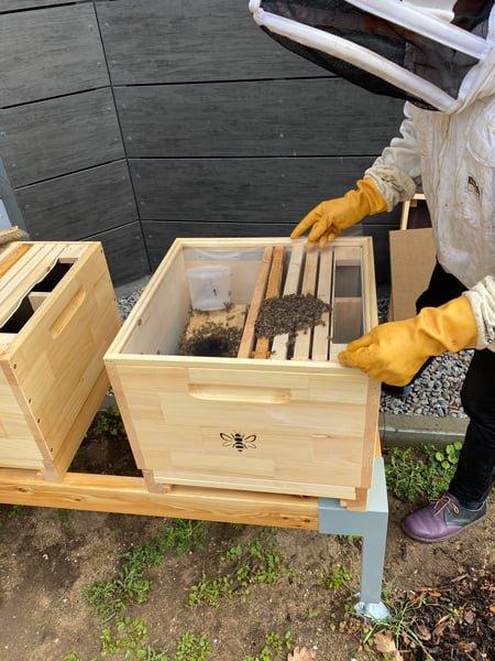 Imker und Bienen