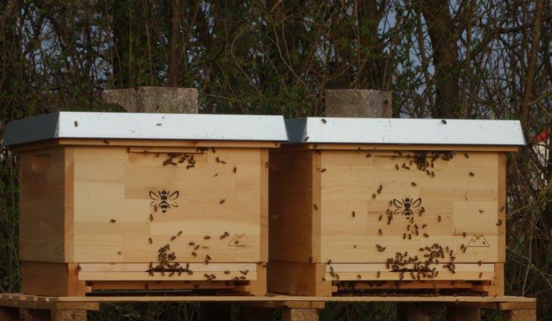 Bienenkästen mit Bienen