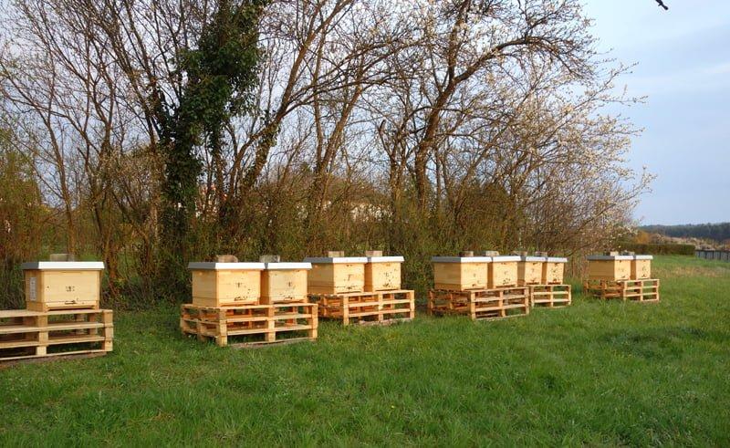 Bienenkästen auf einer Wiese